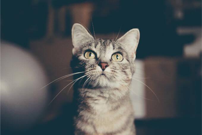なんでだろうって思ってる猫