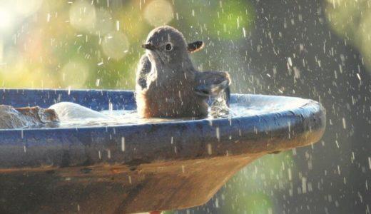 障害や病気でしゃがむのがきつい人に便利な風呂掃除アイテム「ユニットバスボンくんロング」